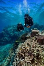 Diving on the Great Barrier Reef. – COURTESY OF TOURISM & EVENTS QUEENSLAND