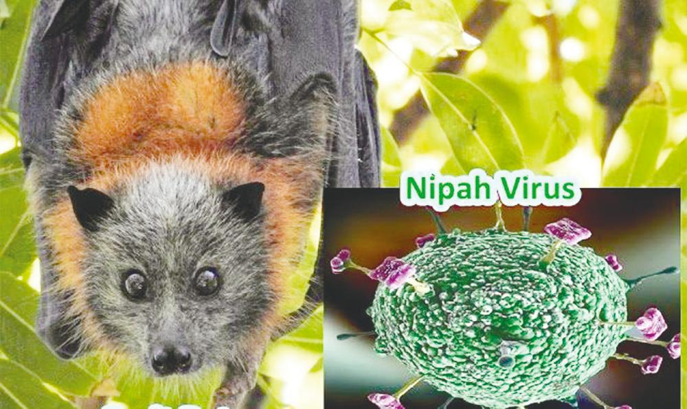 Nipah virus infected 513 people in Malaysia while the death toll was 398.