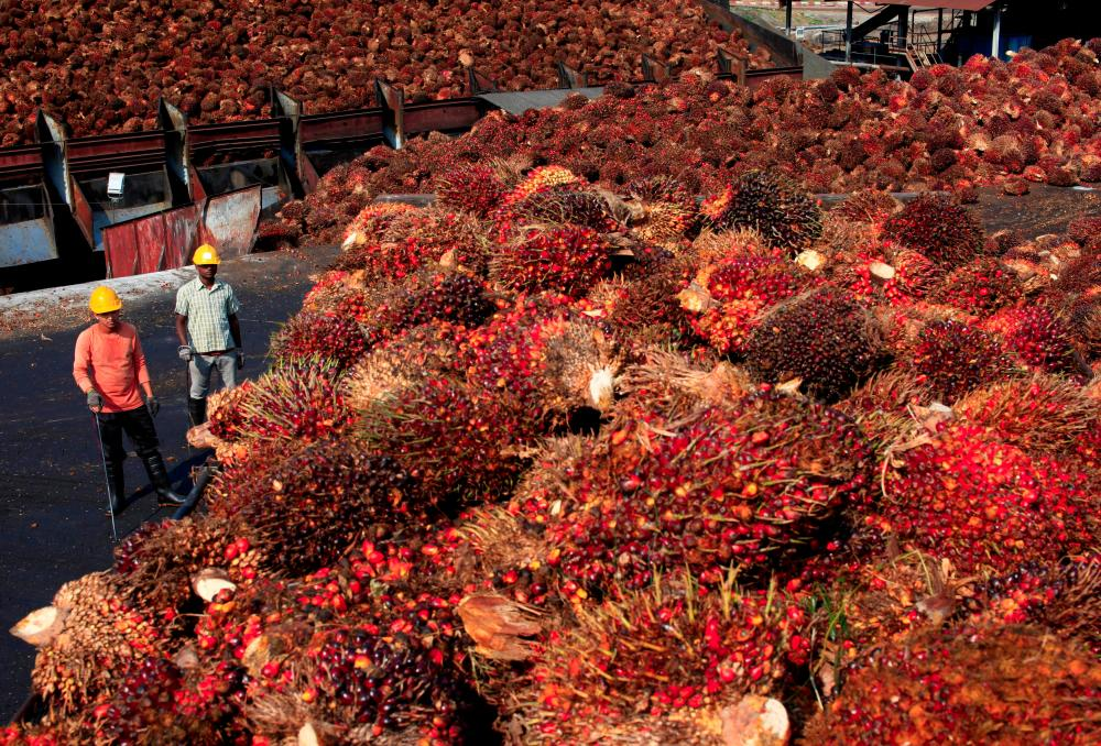 Workers stand near palm oil fruits inside a palm oil factory in Sepang, outside Kuala Lumpur, Feb 18, 2014. — Reuters