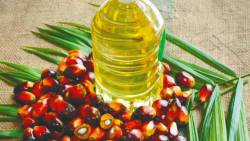 In the first nine months of the year, India imported 3.9 million tonnes of processed and crude palm oil from Malaysia.