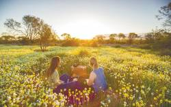 Experience the wildflowers in the outback region of Gascoyne-Murchison. – TOURISM WESTERN AUSTRALIA