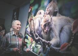 Dr Jane Goodall admiring a photo of Long-Tailed Macaques at the Project Monyet exhibition. – ASHRAF SHAMSUL/THESUN