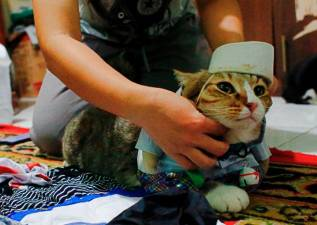 Indonesian finds calling in cat fashion