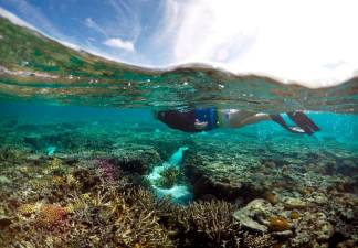 Great Barrier Reef may lose ability to recover
