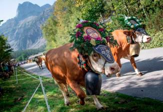 Change hits Austria's Alpine pastures