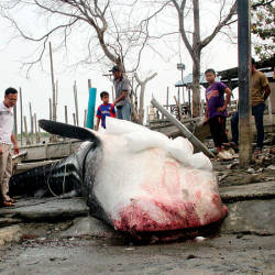 Spectators look upon the whale shark carcass at the Parit Jawa Fishermen's Jetty, today. — Bernama