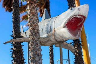 'Jaws' shark finally at Oscars museum
