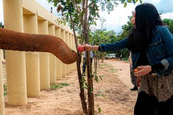 Cher says Kaavan will no longer be a prisoner