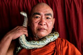 Temple sanctuary for Burmese pythons