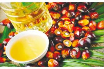 A more bullish outlook for crude oil prices and upside risks to alternative vegetable oils coming from La Niña will also support palm oil prices. – BERNAMAPIX
