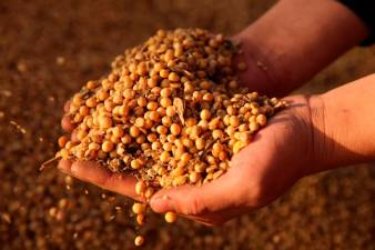 China grants duty exemption on U.S. soybean imports -sources 1