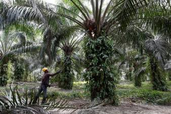 Malaysia lowers crude palm oil duty for April to 5% 1