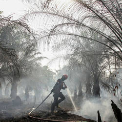 A member of Manggala Agni (forest fire brigade) tries to extinguish peatland fires at a palm plantation in Pekanbaru, Riau province, Indonesia, Sept 4, 2019. — AFP