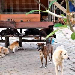 Here's how a Malaysian animal shelter is overcoming shortage of funds