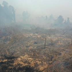 Smouldering peatland is pictured in Kampar, Riau province, on September 17, 2019. Indonesia is battling forest fires causing toxic haze across southeast Asia with aircraft, artificial rain and even prayer, President Joko Widodo said during a visit to a hard-hit area on September 17. - AFP