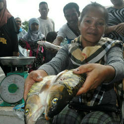 Rosmary Linso shows the 'ikan kelah' (Tor putitora) a freshwater fish known as 'ikan pelian', at the Tenom Weekly Market, on Jan 18, 2019. — Bernama