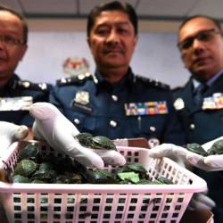 Royal Malaysian Customs officials display seized red-eared slider tortoises during a press conference at the customs authorities building in Sepang on June 26, 2019 after a foiled smuggling attempt by a syndicate. - AFP