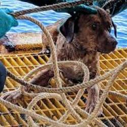 A dog found swimming more than 200km from shore by workers on an oil rig crew in the gulf of Thailand has been returned safely to land.