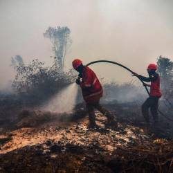 Firefighters battle the burning peatland in Kampar of Riau province, Indonesia on September 18, 2019. - AFP