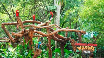 Over 140 species of animals can be found in Sunway Lagoon's Wildlife Park.
