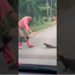 (Video) Man overcomes fear, rescues monitor lizard, becomes internet hero