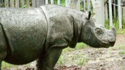 Sabah seeks German expertise in rhino captive breeding