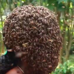 Screenshot of the woman having her face covered by bees.