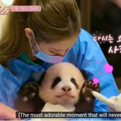 BLACKPINK bashed for endangering health of a baby panda
