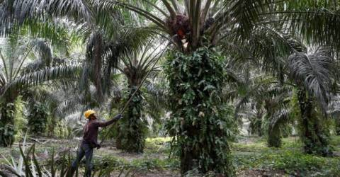 India is expected to buy more Malaysian palm oil