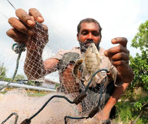 Labourer G. Asokumar, who has not been able to earn his daily wages as a labourer since the movement control order was enforced, showing a small fish he caught at an irrigation canal near Kampung Permatang Rawa in Bukit Mertajam. SUNPIX BY MASRY CHE ANI
