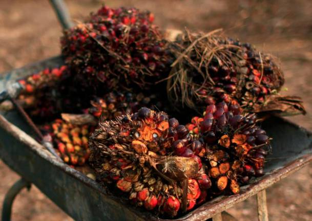 Malaysia to improve trade relations with India pertaining to palm oil