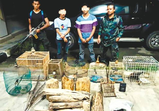 With a price of up to RM800,000, the Malayan Tiger is prime bounty for poachers