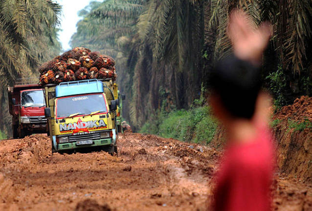 Palm oil advocates reject claim of clearing rainforests for the crop
