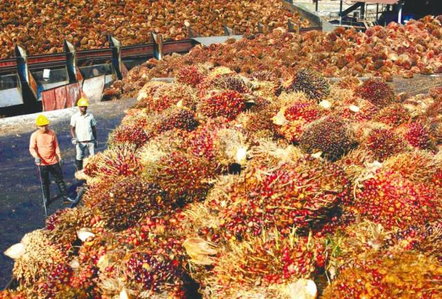 February palm oil stocks rise to 3.05m tonnes