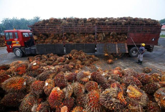 Malaysia's palm oil stocks up 9.3% in September 2019