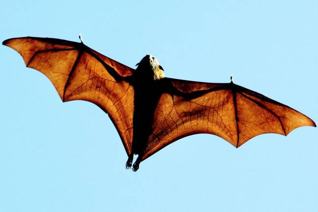 Studies suggest role of bats, snakes in outbreak of China virus