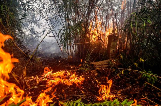 Forest fire continues to blaze in Pekanbaru in Riau province on September 18, 2019. Toxic haze from Indonesian forest fires closed schools and airports across the country and in neighbouring Malaysia on September 18, while air quality worsened in Singapore just days before the city's Formula One motor race.