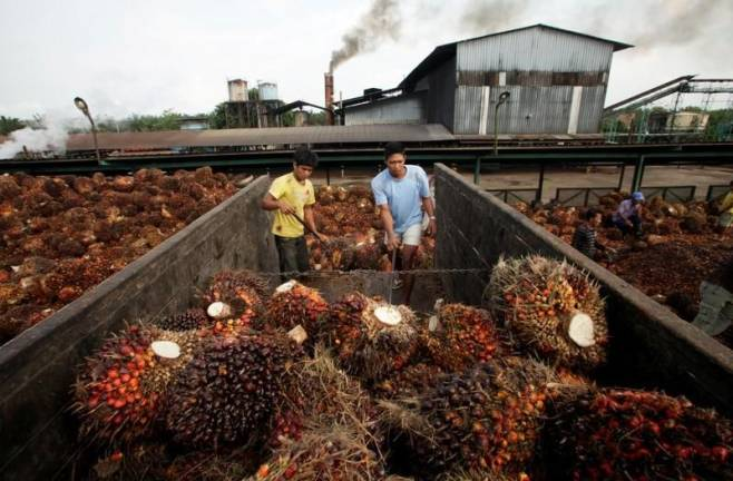 Palm oil stocks at lowest level in 10 months