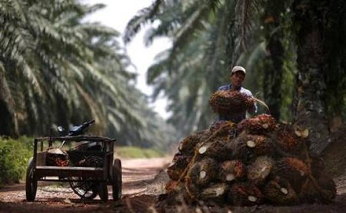 Unawareness among reasons many oil palm planters remain MSPO uncertified
