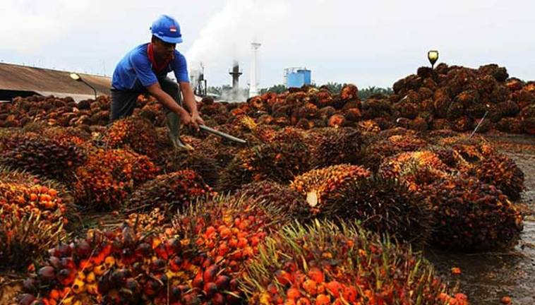 Malaysian palm oil producers step up perks to retain foreign workers
