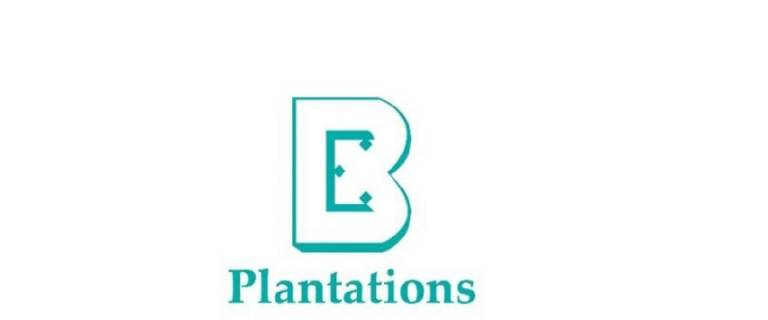 Boustead Plantations shares down 10.8% on Q4 net loss