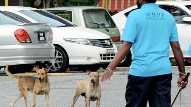 Rabies: Dog-bite incidences still high in Sarawak