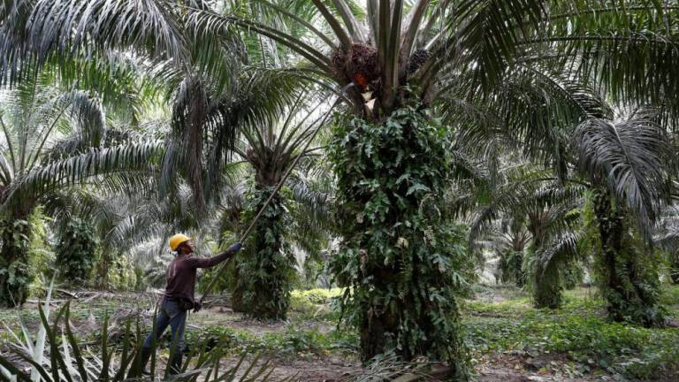 Indonesia says EU anti-subsidy duty part of plan to block palm oil