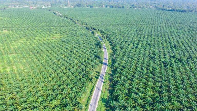 MPIC to introduce application to facilitate oil palm transactions