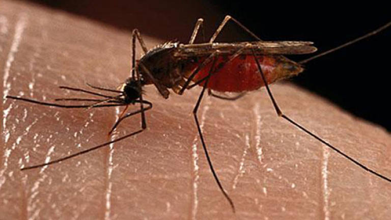Dengue cases in Penang drop by 85.38% compared to last year