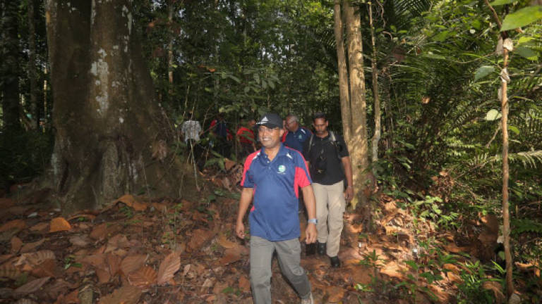 CMCO: 14 forest eco parks in Perak remain closed