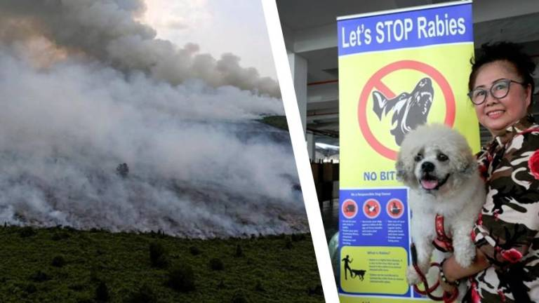 Yearender: Haze, rabies outbreak in Sarawak raise safety and health concerns