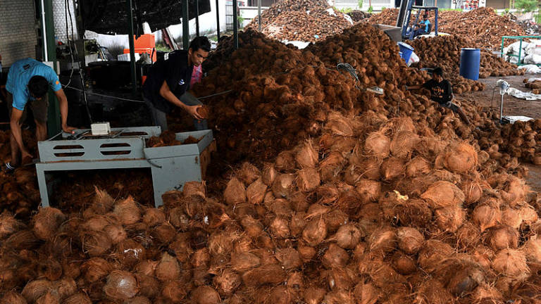 Demand for coconut, coconut milk up