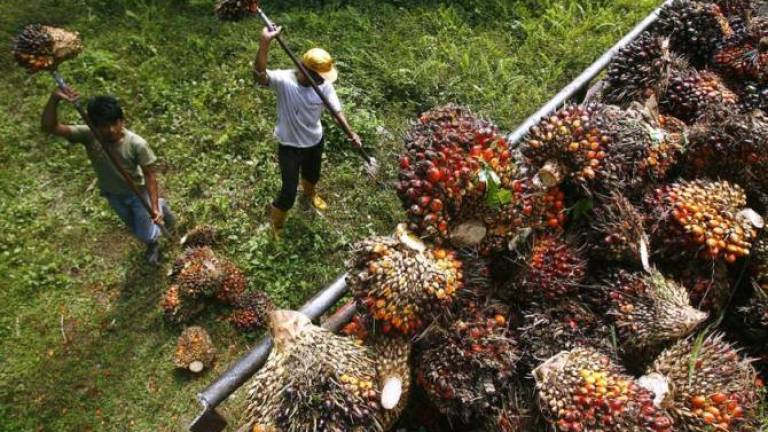 Malaysia welcomes India's move to remove 5% duty on palm oil imports