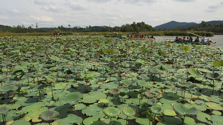 Tasik Chini gazetted as permanent forest reserve